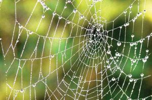spiders_web