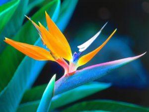 Poem: Bird of Paradise